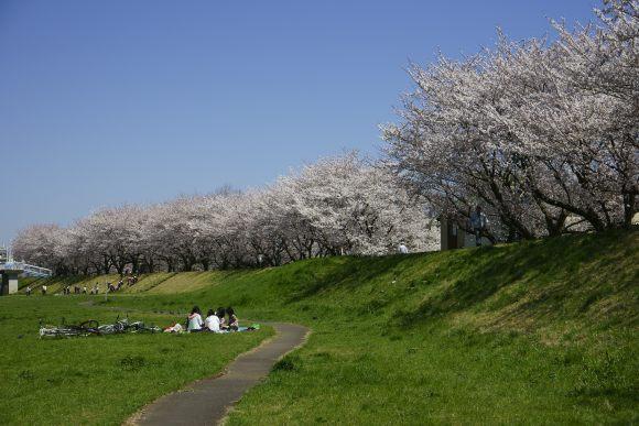 S02_DSC1896柳瀬川の桜.JPG