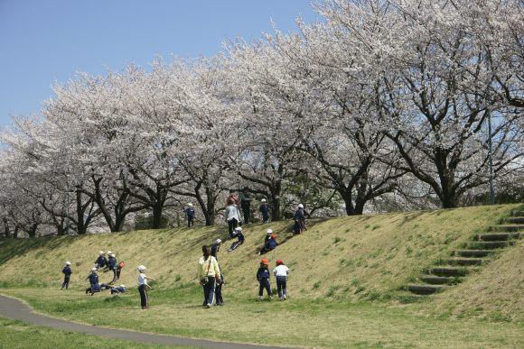 S03_DSC1900柳瀬川の桜.JPG