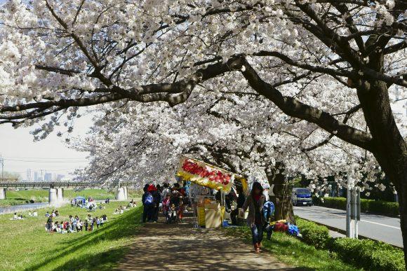 S07_DSC1921柳瀬川の桜.JPG