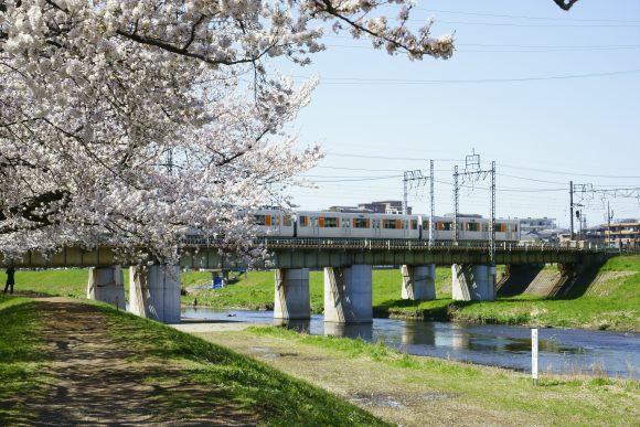 S08_DSC1936柳瀬川の桜と東上線.JPG