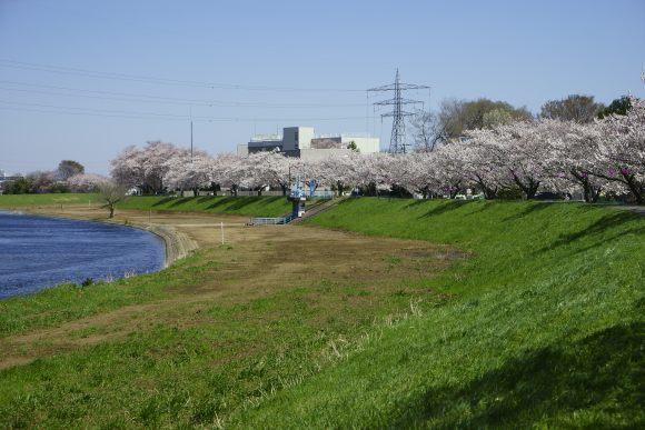 S10_DSC1946柳瀬川の桜.JPG