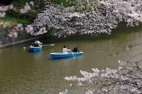S__02DSC_5235千鳥ヶ淵ボートと桜.JPG