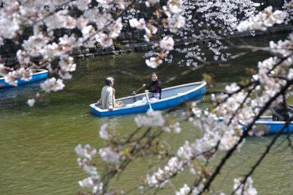 S__03DSC_5255千鳥ヶ淵ボートと桜.JPG