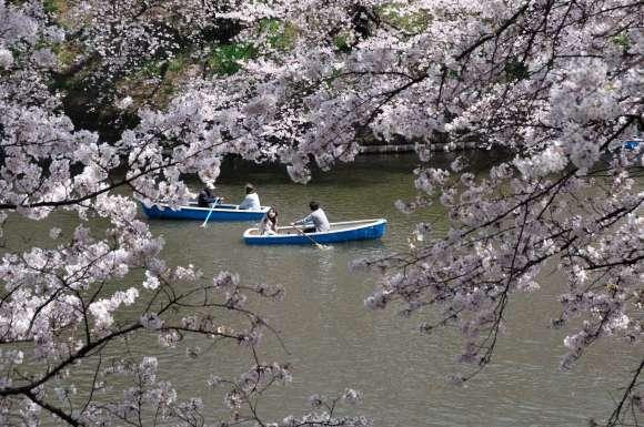 S__04DSC_5265千鳥ヶ淵ボートと桜.JPG