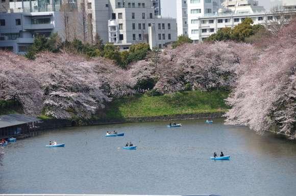S__06DSC_5298千鳥ヶ淵の桜.JPG